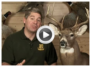 Proper Skinning Techniques For A Deer Shoulder Mount