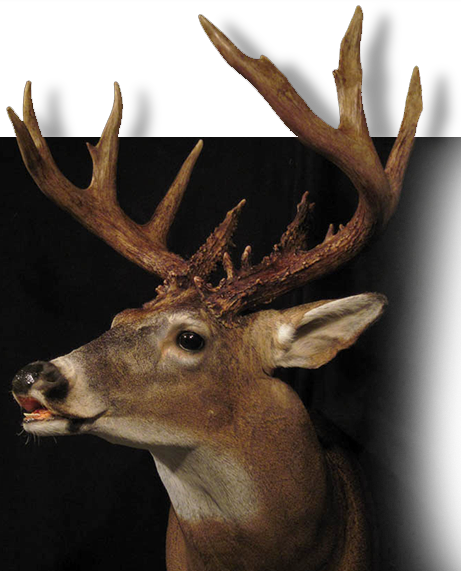 Deer taxidermy videos from taxidermy tube solutioingenieria Images