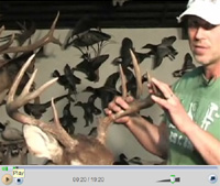 Fixing Broken Antlers On A Deer Mount