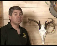 Learn To Create Your Own Deer Skull Mount