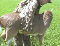 Making a deer decoy out of a real deer hide -The Deercoy