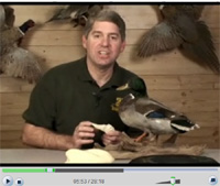 Mounting A Standing Mallard Part ! Video